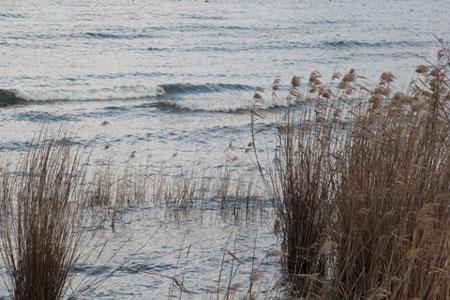 荒れた琵琶湖